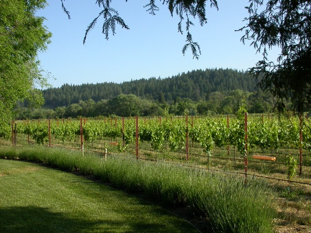 3270 Dry Creek Road-Vineyard.jpg